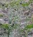 Gras Schapengras per kg.