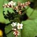 Flora Fauna mengsel per kg.